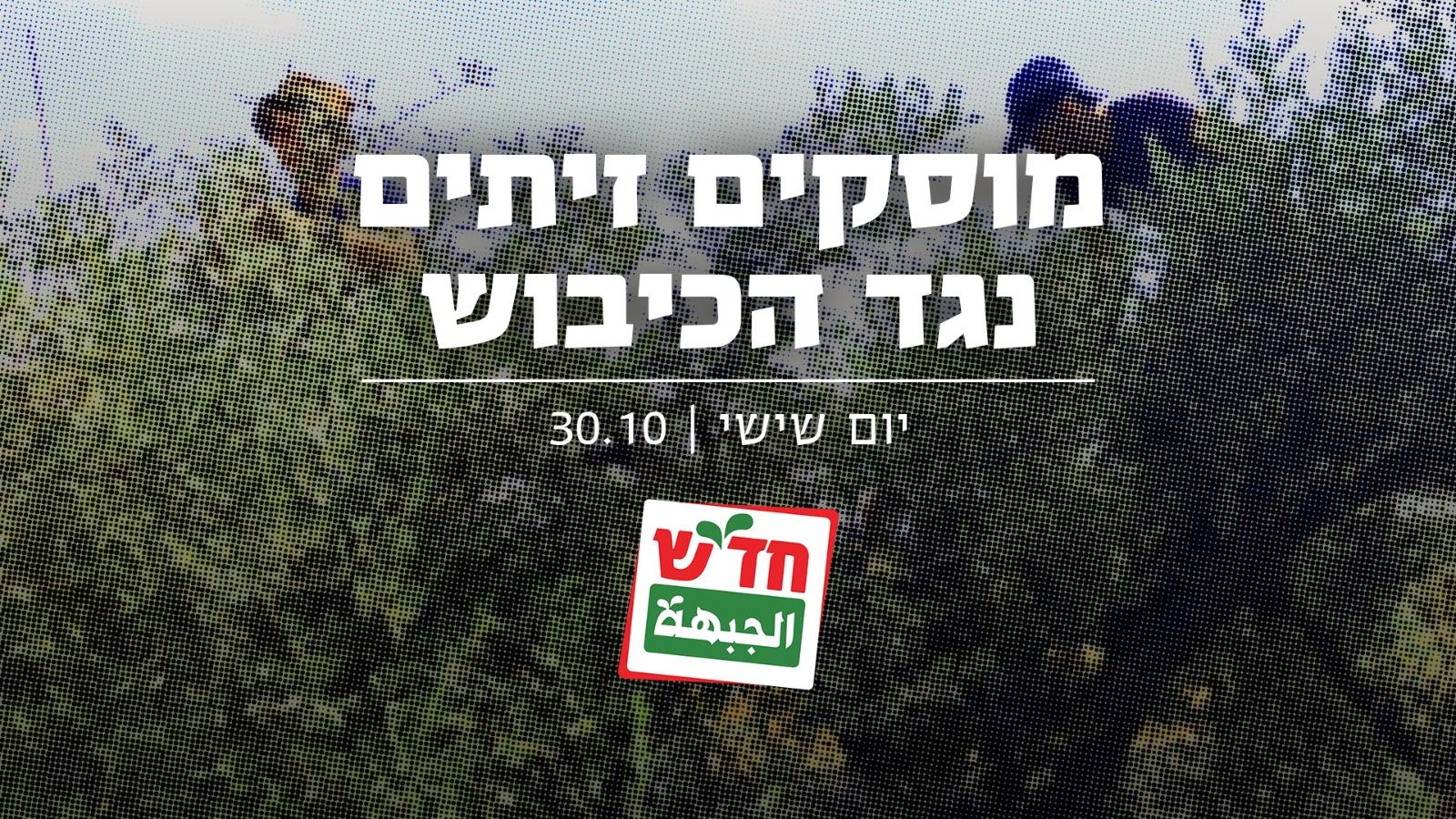 """פעילי חד""""ש יצטרפו למסיק הפלסטיני-ישראלי בשטחים הכבושים"""