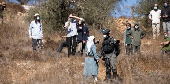 """האו""""ם: תוך שנה עקרו שלטונות הכיבוש יותר מ-4,000 עצים של פלסטינים"""