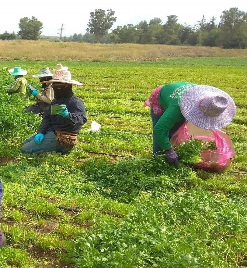 ניצול מחפיר וסכנת חיים: המחיר הכבד שמשלמים עובדי החקלאות מתאילנד בשדות ישראל