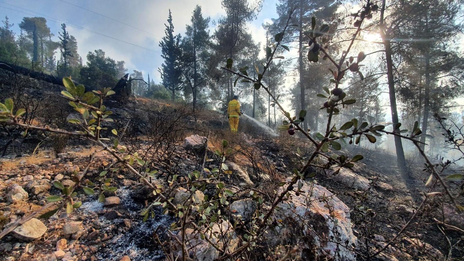 """על השריפה המחרידה בהרי ירושלים, יערות הקק""""ל והצדק לשני העמים"""